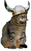 cat with viking helmet