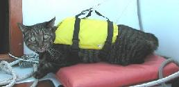 cat in life vest flotation device